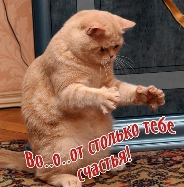 http://img1.liveinternet.ru/images/attach/c/3/84/330/84330763_83492736_VO_1OOT_STOLKO_TEBE_SCHASTYA.jpg