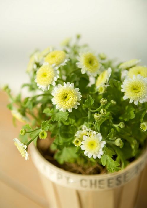 цветы1 (497x700, 71Kb)