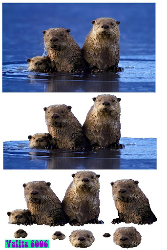 Otters3d (342x512, 72Kb)