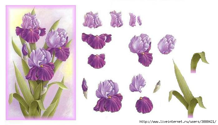 Purpleiris3d (700x401, 106Kb)
