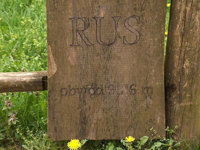 Дворец Рачиньских в селении Рогалин 38793
