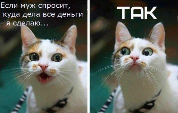 шутки приколы котоматрица/1338231846_prikol_naya_kotomatrica (604x385, 39Kb)