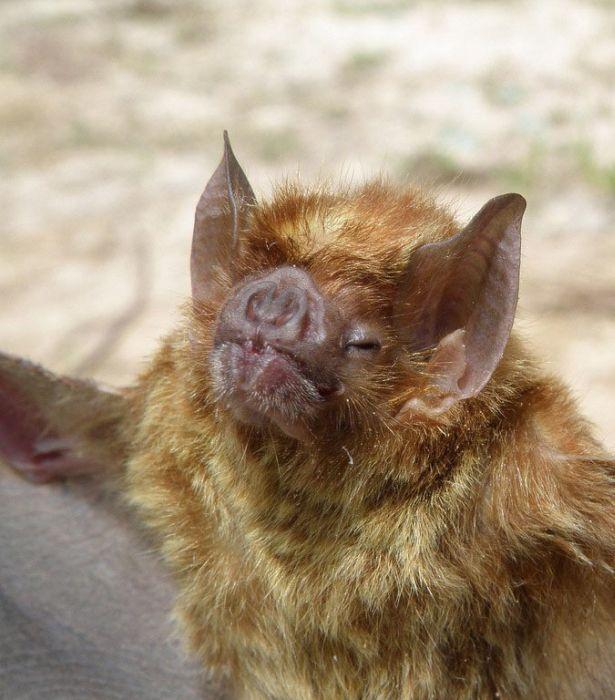 bat_0900 (615x700, 83Kb)