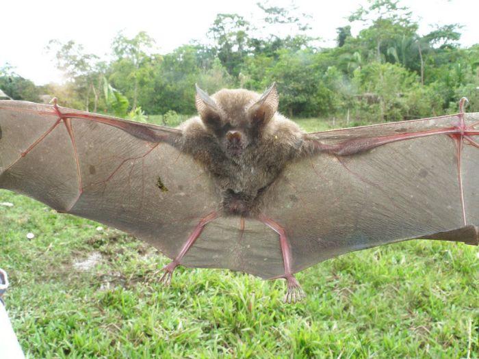 bat_1100 (700x525, 96Kb)