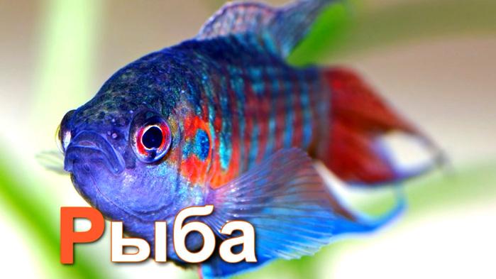рыба (700x393, 101Kb)