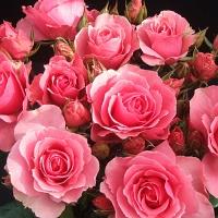 42af7947ed1e02eb9a2efcd5c9384e6d розы - маленькое (200x200, 28Kb)