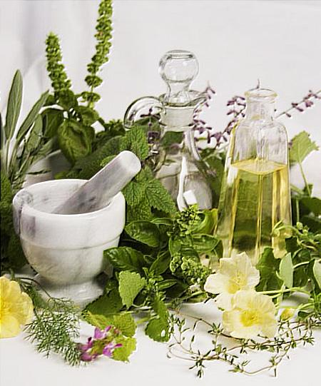 лекарственные-травы (450x541, 122Kb)