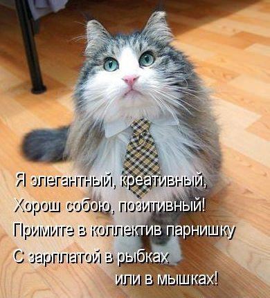 4716381_elegantnykotstih_1_ (390x431, 42Kb)