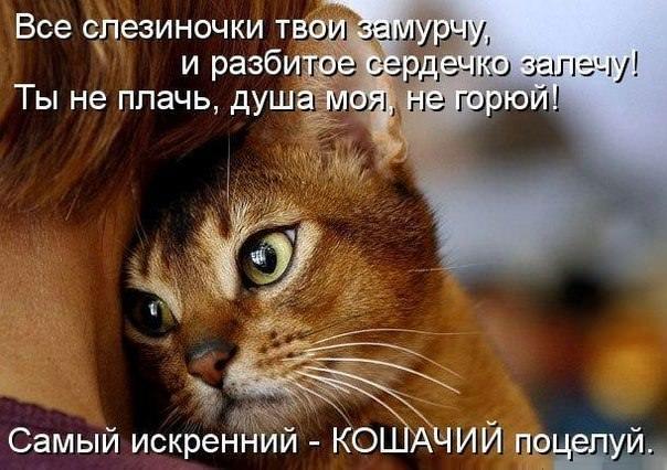 4716381_stihkotik (604x426, 63Kb)
