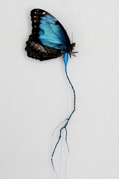 19-vlinderkast-04-1 (466x700, 348Kb)