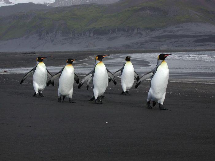 5814203_antarctic_9 (700x525, 42Kb)