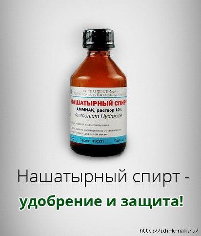 как использовать нашатырный спирт на даче, /1431044535_NASHATYIRNYIY_SPIRT__UDOBRENIE_I_ZASCHITA_ (412x483, 68Kb)