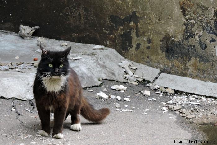 кот из Выборга (700x466, 291Kb)