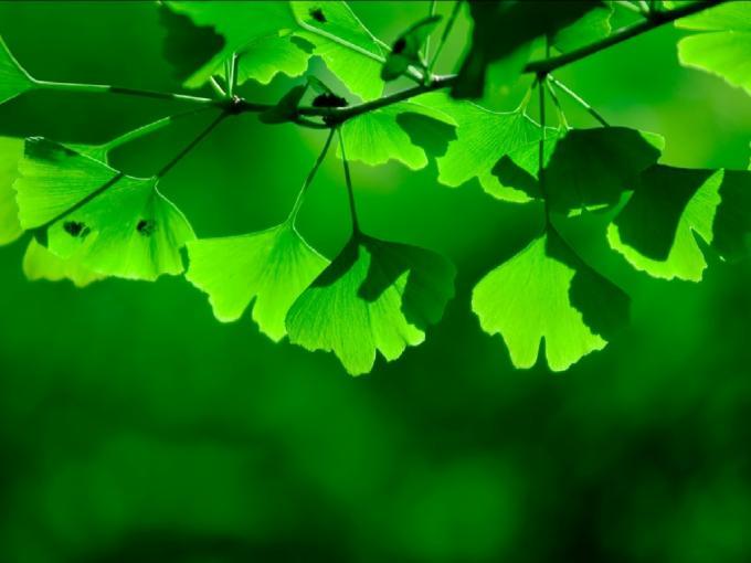 green_shadows_1024x768 (680x510, 32Kb)
