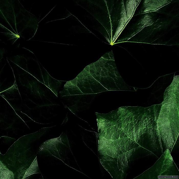 yesil-kara-yapraklar (700x700, 110Kb)