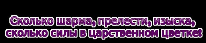 coollogo_com-77882869 (700x147, 84Kb)