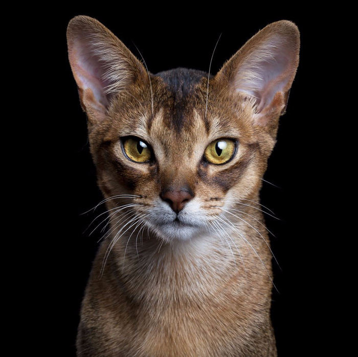 Портреты кошек и собак от фотографа Роба Баху (700x699, 313Kb)