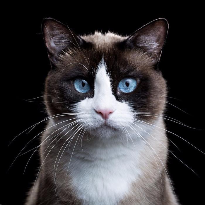 Портреты кошек и собак от фотографа Роба Баху3 (700x699, 303Kb)