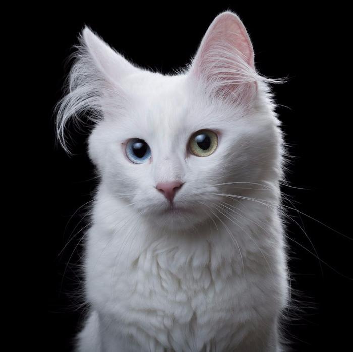 Портреты кошек и собак от фотографа Роба Баху5 (700x699, 236Kb)