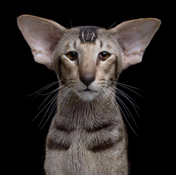 Портреты кошек и собак от фотографа Роба Баху7 (700x699, 285Kb)