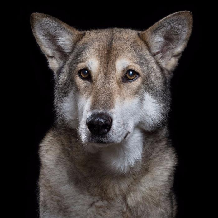 Портреты кошек и собак от фотографа Роба Баху10 (700x699, 299Kb)