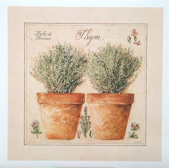 Herbes Thym (700x696, 479Kb)