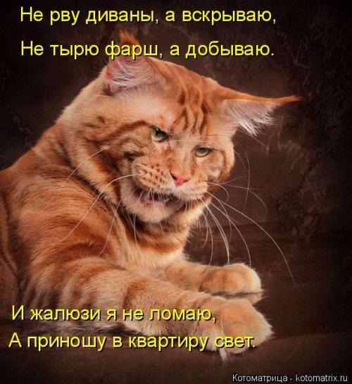 1431703193_kotomatrica-19 (500x545, 270Kb)