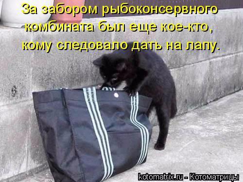1431703198_kotomatrica-4 (500x374, 167Kb)