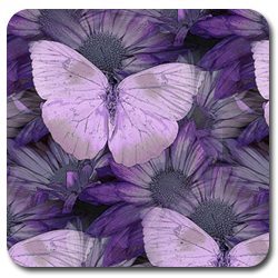 ава_фиолет_бабочки (250x250, 120Kb)