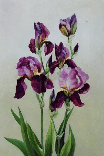 19-irisy (332x500, 24Kb)