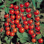 Превью tomato (1) (700x700, 502Kb)