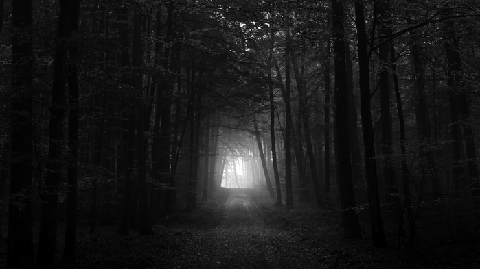 wallpapers-for-gt-dark-forest-dark-forest-wallpaper-hd-wallpapers-android-for-mobile-free-download-1920x1080-background-iphone-5-desktop (700x393, 148Kb)