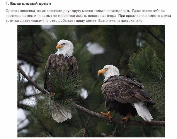 7 животных, преданности которых можно позавидовать (604x476, 207Kb)