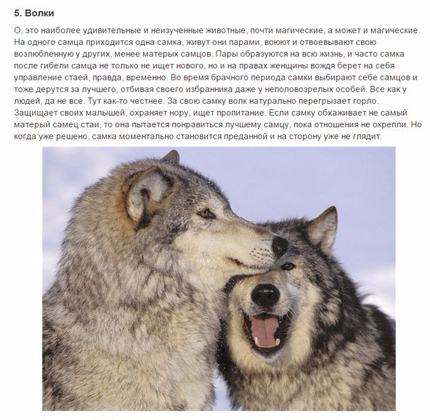 7 животных, преданности которых можно позавидовать5 (604x591, 316Kb)