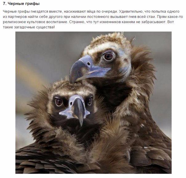 7 животных, преданности которых можно позавидовать7 (604x577, 238Kb)