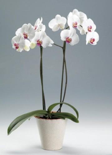 24.10_orhidei (360x500, 73Kb)