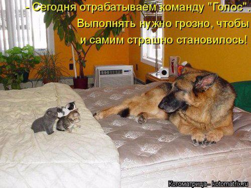 1432373948_kotomatrica-19 (500x375, 218Kb)