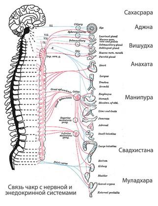 Чакры: расположение на теле и