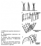 Превью formirovka_kustov_maliny (527x600, 115Kb)