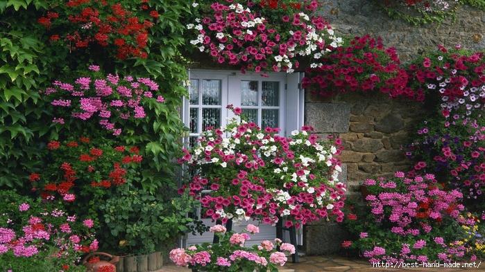 обои на рабочий стол цветы в саду на даче № 225489 без смс