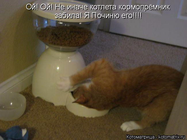 kotomatritsa__ (650x488, 183Kb)