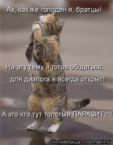 kotomatritsa_1M (391x500, 117Kb)