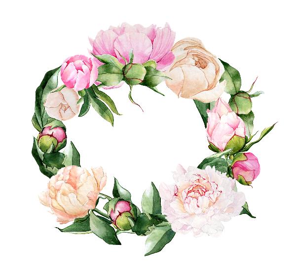 Цветы пионы пнг 1