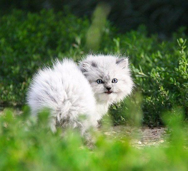 Котенок с арбузом4 (604x551, 282Kb)