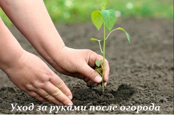 2749438_yhod_za_rykami_posle_ogoroda (600x410, 360Kb)