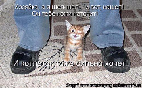 1432920515_kotomatrica-1 (500x310, 170Kb)