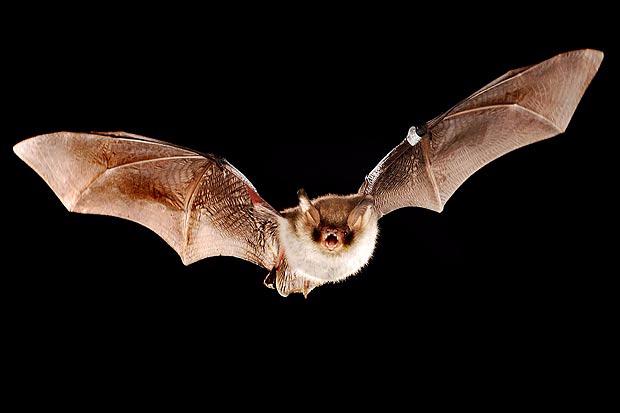 bats (620x413, 93Kb)