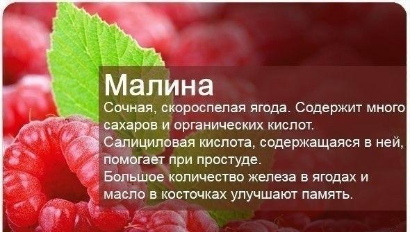 ягоды (590x335, 52Kb)