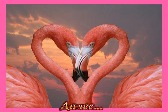 5845504_42675765_1239996662_Love_under_the_sun_by_photobabybouvier (699x466, 60Kb)