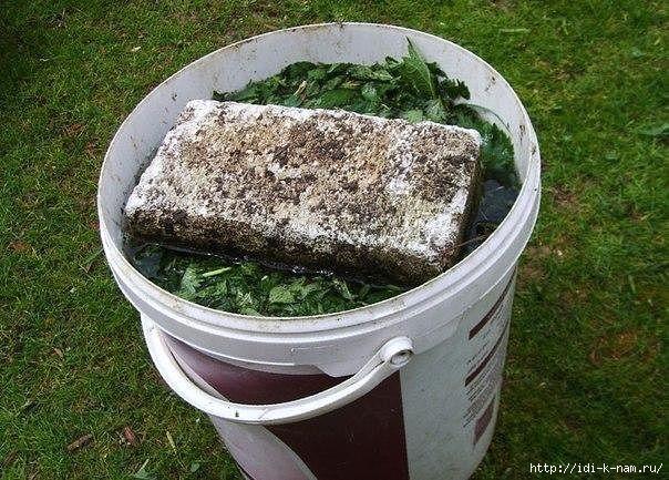 как сделать жидкое азотистое удобрение, как сделать удобрение из травы. /1433999244_image (604x433, 230Kb)